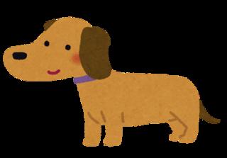 dog_miniature_dachshund.png